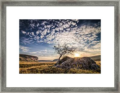 Rock Tree And Rising Sun Framed Print by Mike Gaudaur