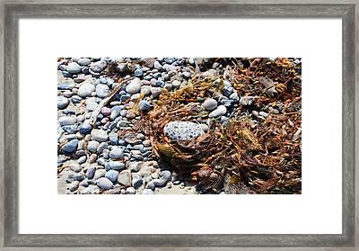 Rock Weed Framed Print