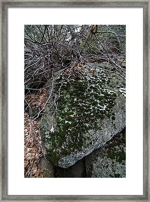 Rock With Lichen And Snow Framed Print