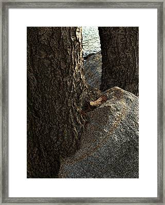 Rockin Tree Framed Print