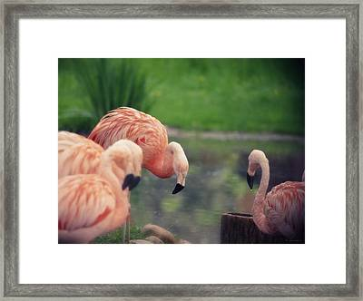Rocking Pink Framed Print by Maria Angelica Maira