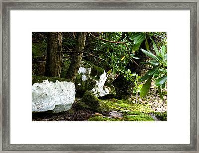 Rocks Along Williams River Framed Print by Thomas R Fletcher
