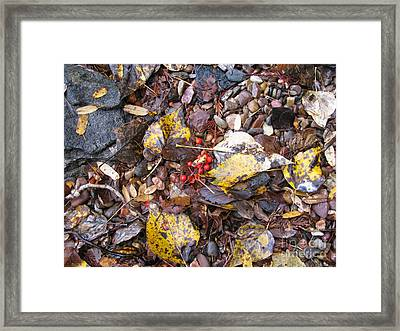 Rocks And Berries Framed Print by Leone Lund