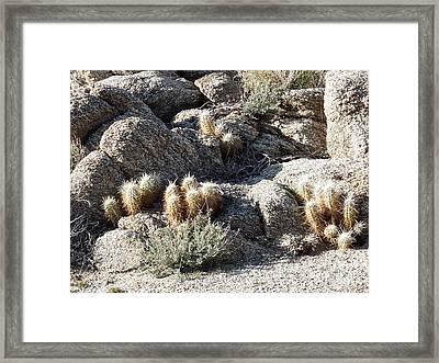 Rocks And Cactus Framed Print by Deborah Smolinske