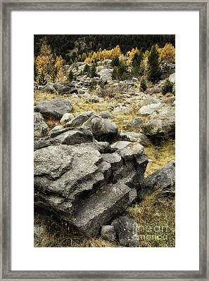 Rocks And Larch Pines Framed Print