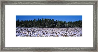Rocks In Snow Covered Landscape Framed Print