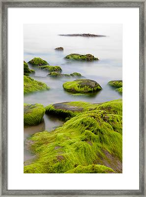 Rocks Or Boulders Covered With Green Seaweed Bading In Misty Sea  Framed Print by Dirk Ercken