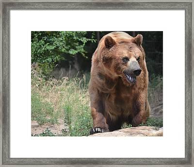 Rockstar Grizzly Framed Print