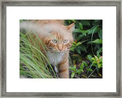 Rockwell Framed Print