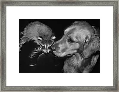 Rocky And Jake Monochrome Framed Print