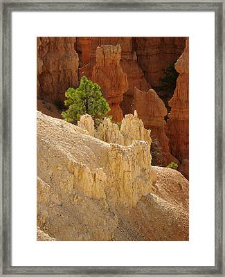 Framed Print featuring the photograph Rocky Embrace by Meghan at FireBonnet Art