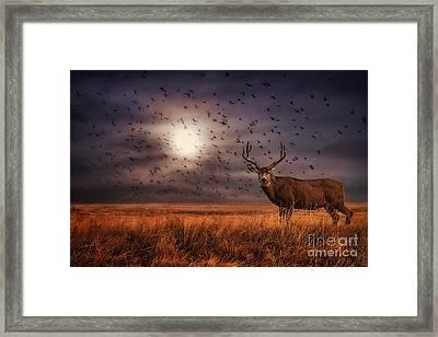 Rocky Mountain Arsenal Deer And Birds Framed Print