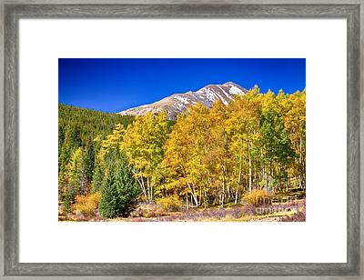 Rocky Mountain Autumn Bonanza Framed Print by James BO  Insogna