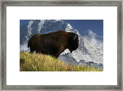 Rocky Mountain Buffalo Framed Print by Daniel Eskridge