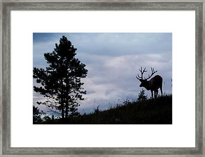 Rocky Mountain Bull Elk At Dusk Framed Print