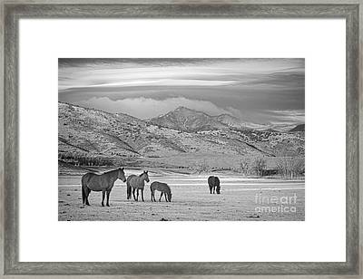 Rocky Mountain Country Morning Bw Framed Print by James BO  Insogna