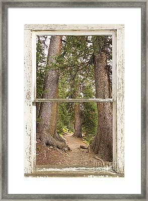Rocky Mountain Forest Window View Framed Print