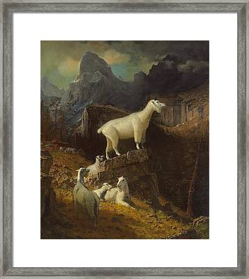 Rocky Mountain Goats Framed Print by Albert Bierstadt