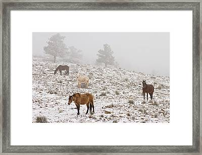 Rocky Mountain Horses Snow And Fog Framed Print by James BO  Insogna
