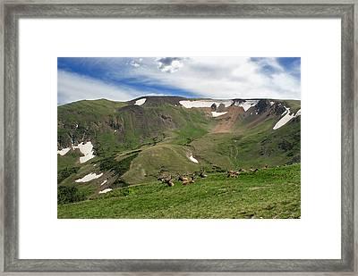Rocky Mountain National Park Elk Framed Print by Julie Magers Soulen