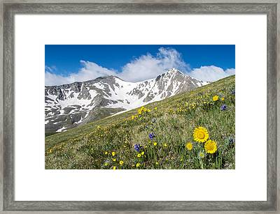 Rocky Mountain Springtime Framed Print by Aaron Spong