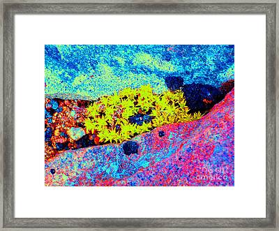 Framed Print featuring the photograph Rocky Mountain Stonecrop by Ann Johndro-Collins