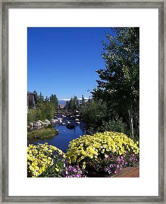 Rocky Mountain Summer Life Framed Print
