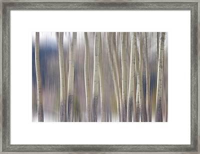 Rocky Mountain Winter Aspen Tree Forest Dream Framed Print