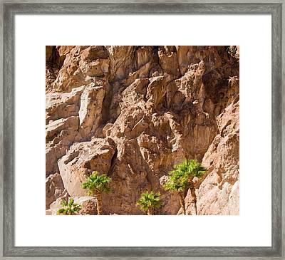 Rocky Oasis Framed Print by Douglas Barnett