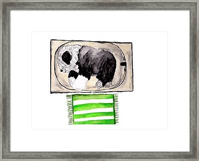 Rocky The Tub Sleeper Framed Print