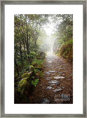 Rocky Trail In The Foggy Forest Framed Print