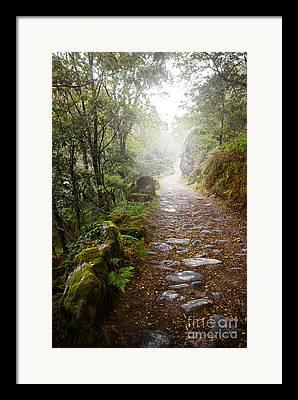 Rain Forests Framed Prints
