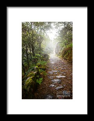 Rain Forest Framed Prints