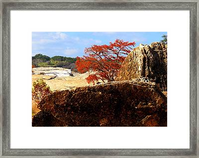 Framed Print featuring the photograph Rocky Tree by David  Norman
