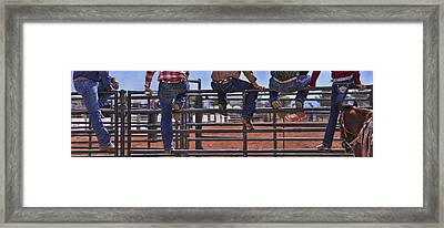 Rodeo Fence Sitters Framed Print by Priscilla Burgers