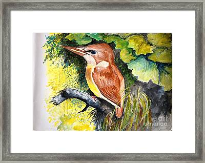 Rofous - Backed Kingfisher  Framed Print