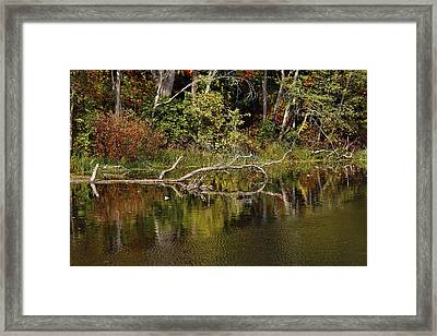 Rogue River Reflections Framed Print