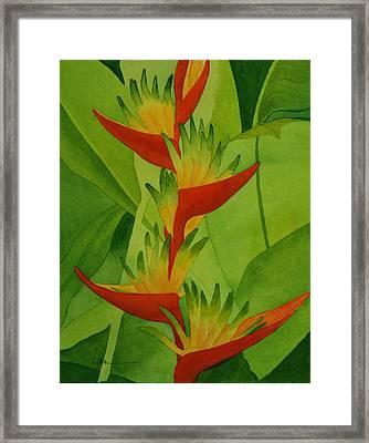 Rojo Sobre Verde Framed Print by Diane Cutter