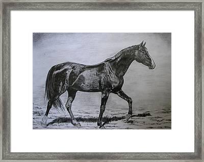 Roko Framed Print by Melita Safran