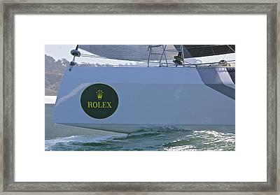 Rolex Cat Framed Print by Steven Lapkin