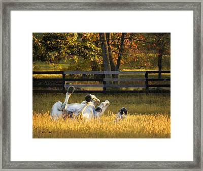 Roll In The Hay Framed Print by Joan Davis