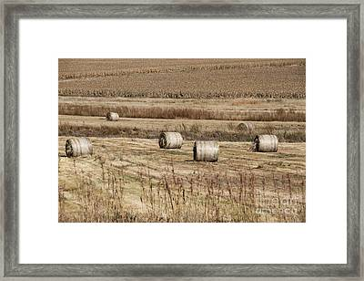 Roll On The Hay Framed Print