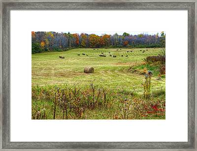 Rolled And Ready Framed Print by Donna Doherty