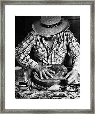 Rolling Cuban Cigars Framed Print