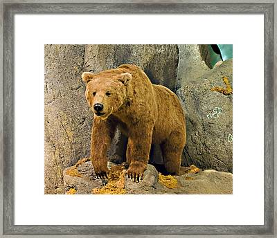 Rolling Hills Wildlife Adventure 1 Framed Print