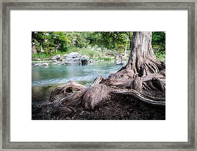 Rolling Roots Of A Bald Cypress - Texas Framed Print