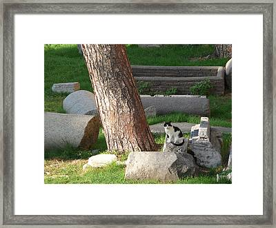 Framed Print featuring the photograph Roman Beauty by Evelyn Tambour