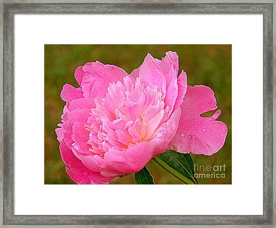 Pink Peony Framed Print by Eunice Miller