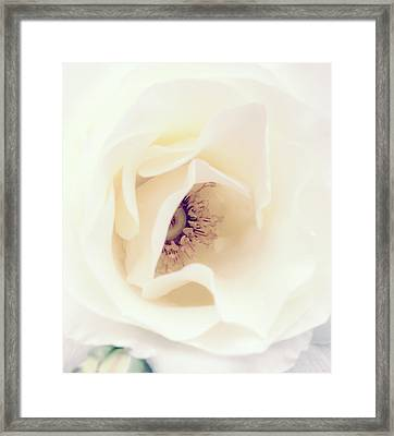 Romance In A Rose Framed Print