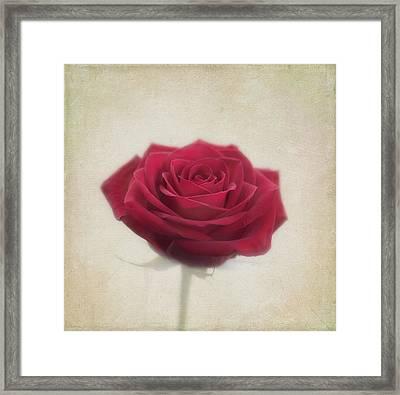 Romance Framed Print by Kim Hojnacki
